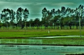 paddy season